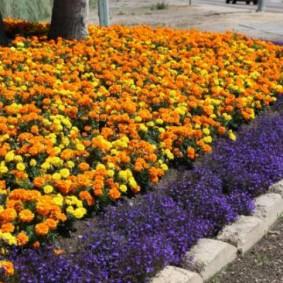 Сиреневые цветочки вдоль бордюра клумбы