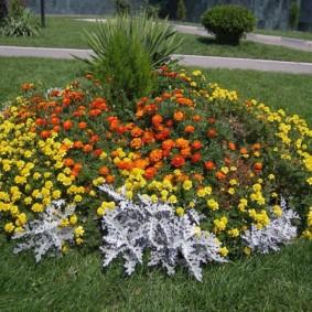 Клумба с хвойным растением по центру