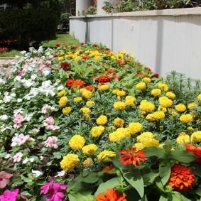 Цветочная клумба из однолетних растений разных сортов
