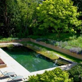 Небольшой бассейн рядом с высокими деревьями