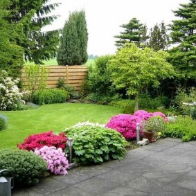 Красивая лужайка с зеленой травой