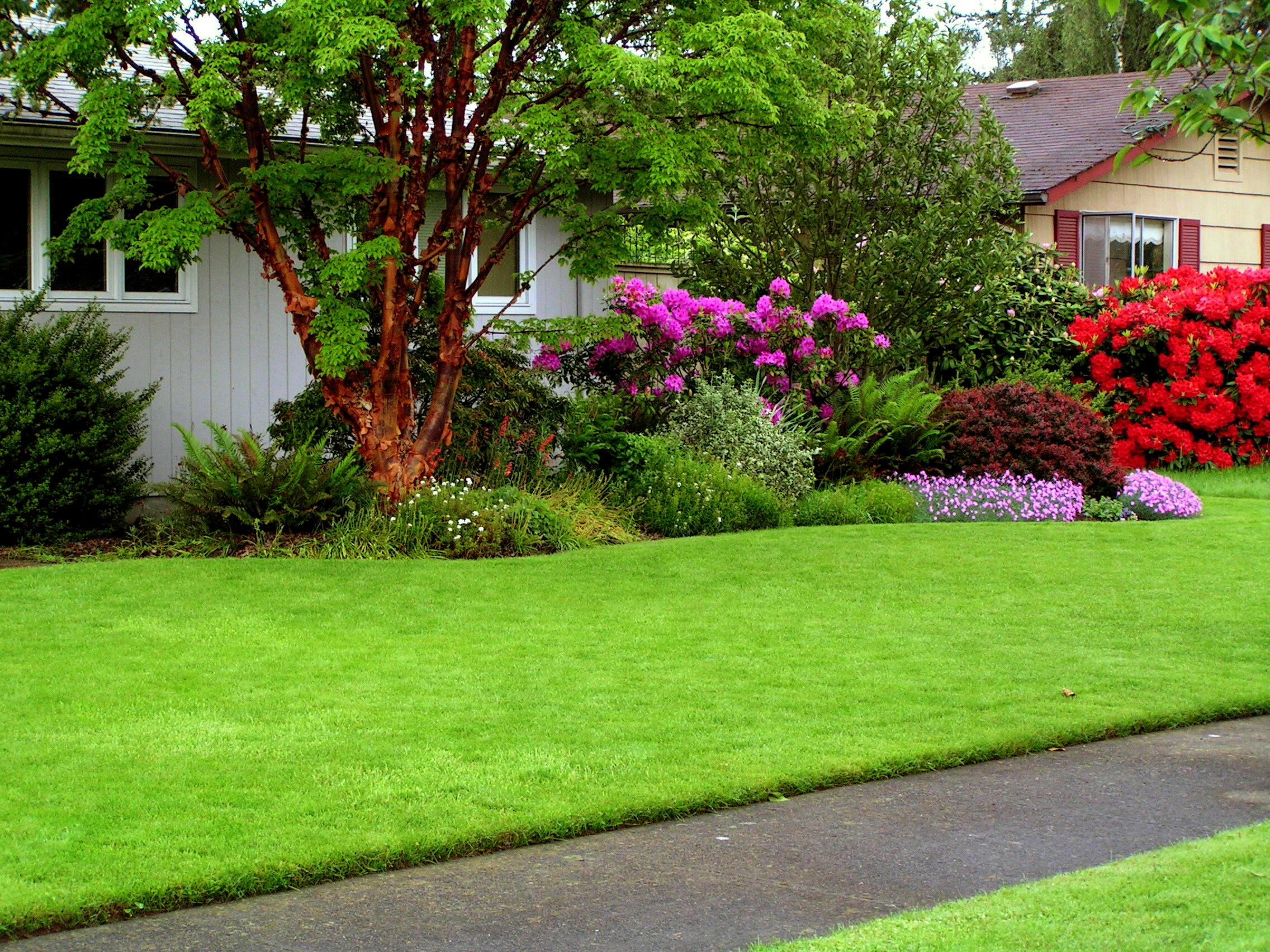 одним достоинством дизайн лужайки перед домом фото там все чистенько