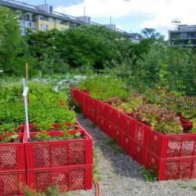 Огородные грядки из пластиковых ящиков