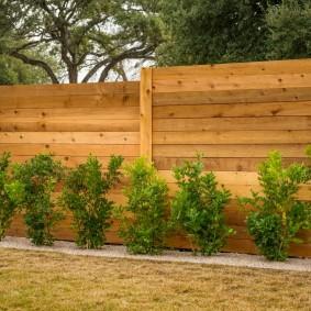 Невысокие кустики вдоль глухой деревянной ограды