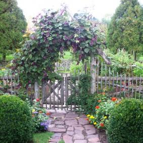 Вьющиеся растения на садовой калитке