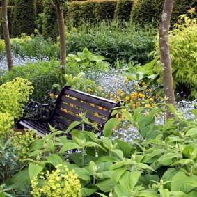 Деревянная скамейка среди заросшего сада