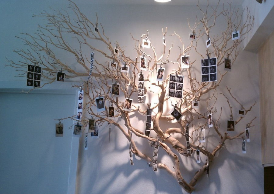 Мини снимки на ветке дерева в интерьере квартиры