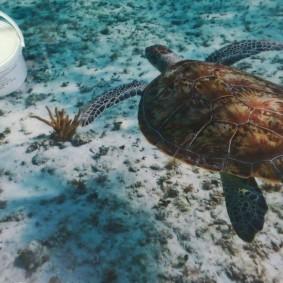3d пол с изображением морской черепахи