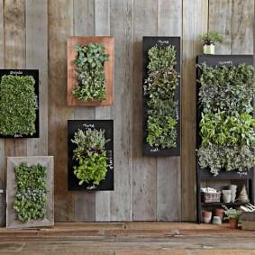 Картины из зеленых растений на деревянной стене