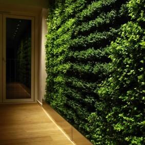 Коридор в квартире с вертикальным озеленением