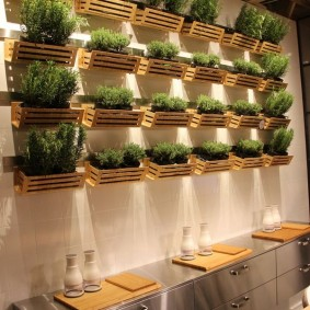 Деревянные полочки с зелеными травами