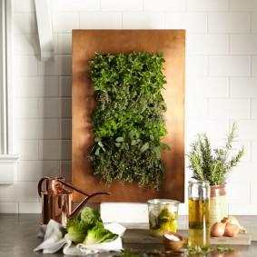 Комнатные растения на металлическом щите