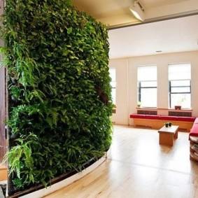 Комнатные растения в условиях недостаточной освещенности