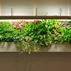 Подсветка домашних растений в длинном контейнере