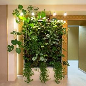 Дизайн коридора с домашними растениями