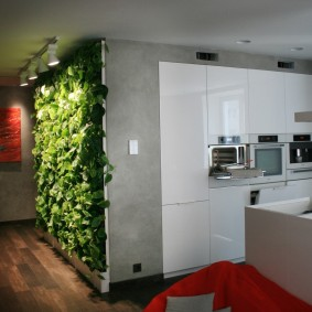 Вертикальное озеленение кухни-гостиной