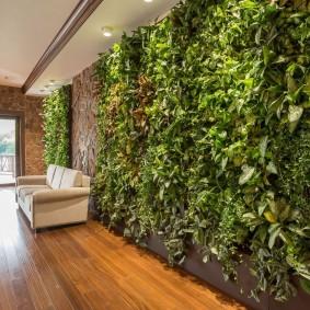 Длинная стена с живыми растениями