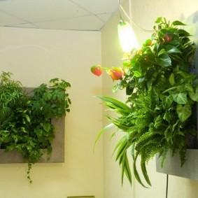 Картины из живых растений в интерьере квартиры