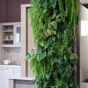 Узкая полоска зелени в современной кухне