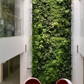 Многометровая стена с зелеными растениями