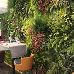 Тенелюбивые растения в интерьере квартиры