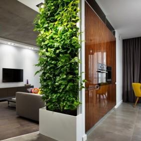 Перегородка с растениями в кухне-гостиной