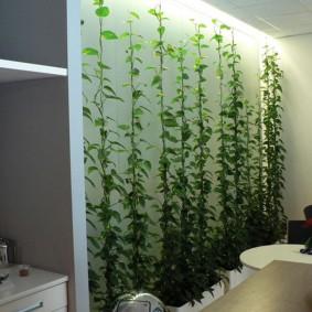 Вьющиеся растения вдоль стены в квартире