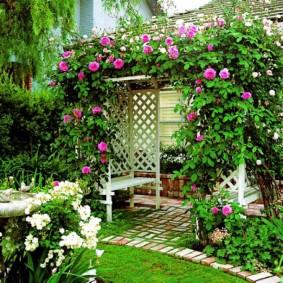 Плетистые розы на садовой перголе