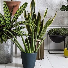 Теневыносливые растения с узкими листьями