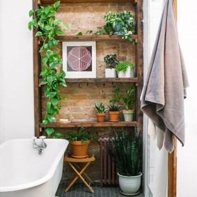 Комнатные растения в ванной на полочках