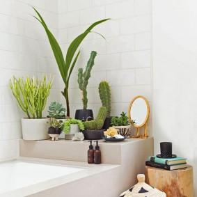 Кактусы на полочке в ванной комнате