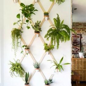 Деревянная решетка с домашними растениями