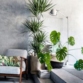Резные листья теневыносливого растения