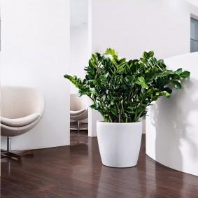 Живое растение на полу в зале