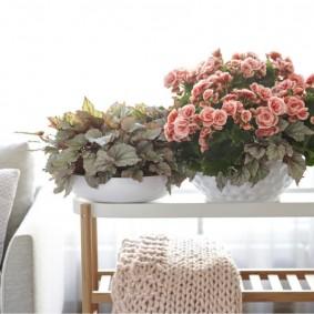 Небольшой столик с цветущими фиалками