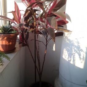 Комнатные растения на балконе квартиры