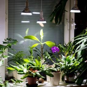 Фито-лампы для комнатных растений