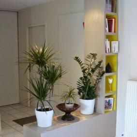 Место для живых растений в коридоре квартиры