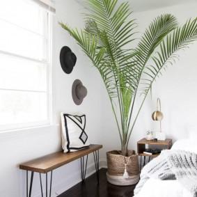 Пальма в дизайне спальной комнаты