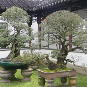 Сад в китайском стиле на небольшом участке