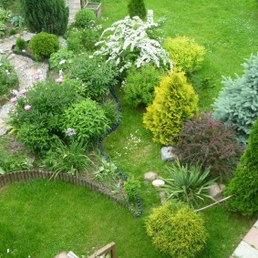 Молодые хвойные растения в своем саду