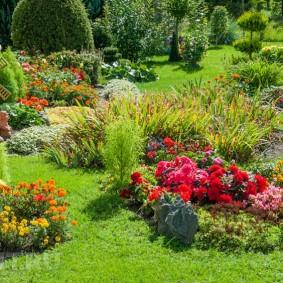 Красные цветы на садовой клумбе
