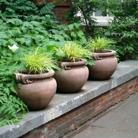 Керамические вазоны с садовыми растениями