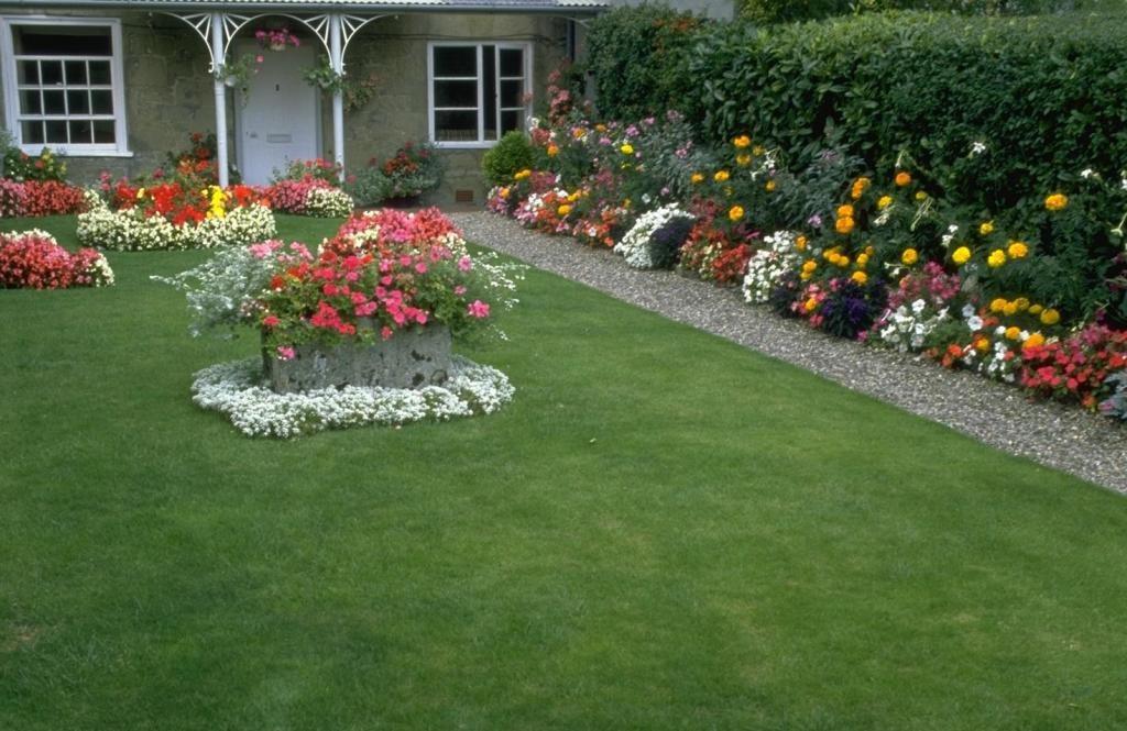 Цветущие розы на зеленом газоне