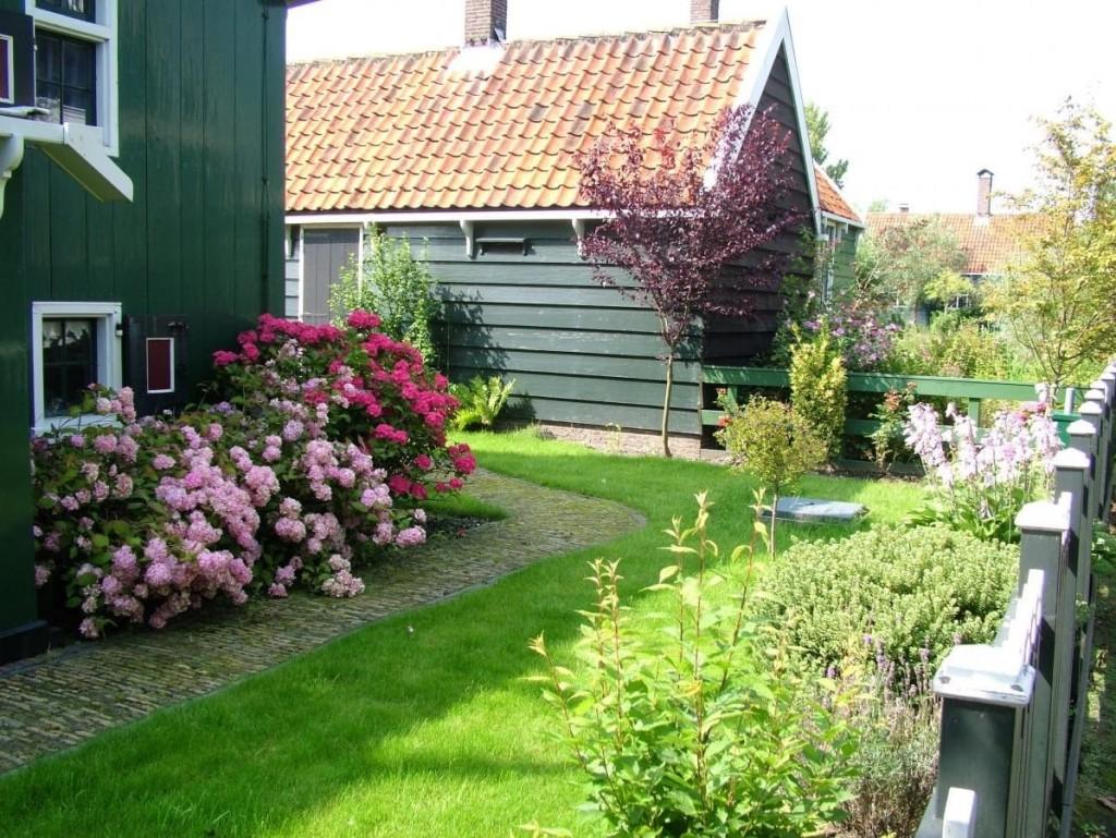 Кусты роз вдоль дома на участке сада в голландском стиле