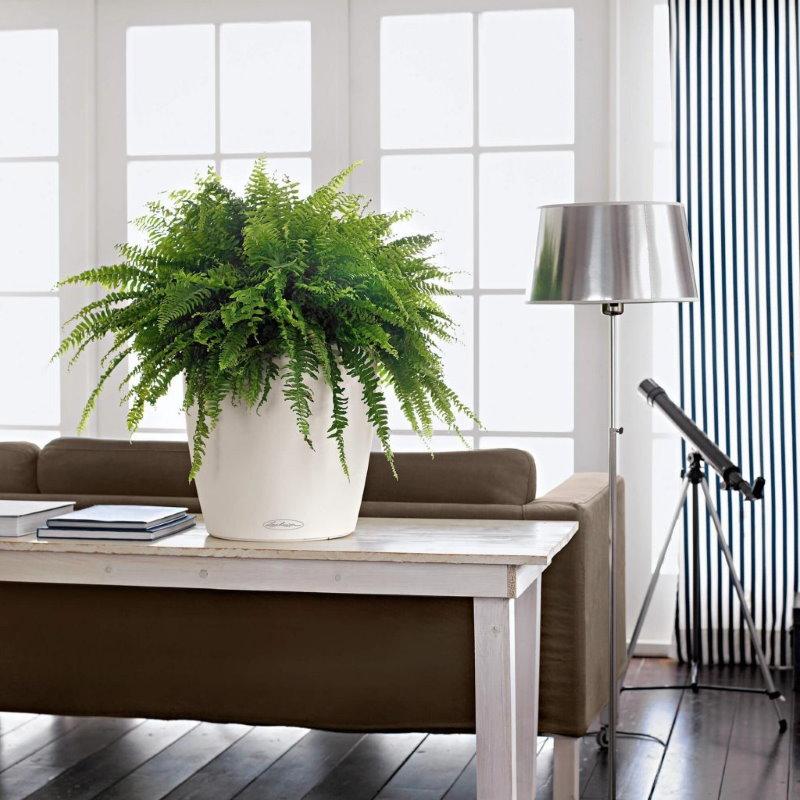 Комнатный папоротник в интерьере зала квартиры