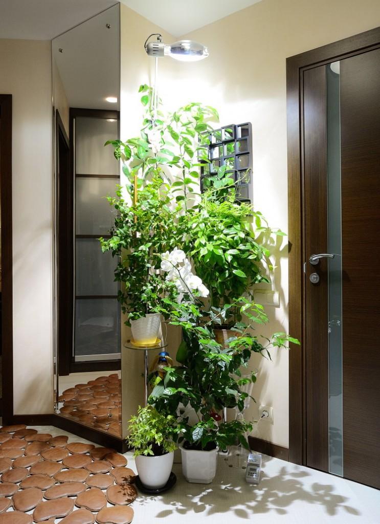 Живые растения в прихожей эко-стиля