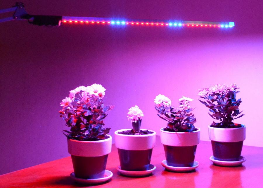 Подсветка цветущих растений светодиодной лампой