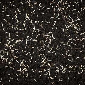 Семена злаков на поверхности будущего газона