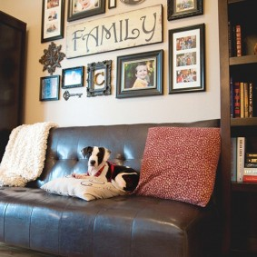 Домашняя собака на диване в гостиной